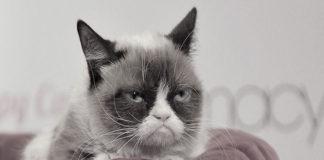 Muere Grumpy Cat, la gata gruñona más famosa de internet