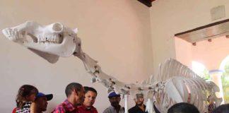 Exhibición de Anatomía Animal llega a Colina