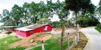 Zona panamericana de Mérida se llena de ranchos por 'invasores de oficio'