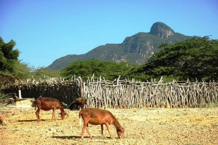 Hoy 9 de agosto: Paraguaná cumple 520 años