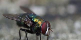 """""""Esto fue lo que dejó las lluvias: moscas y están como arroz"""", así expresó una ama de casa residenciada en la población de Caseto,"""