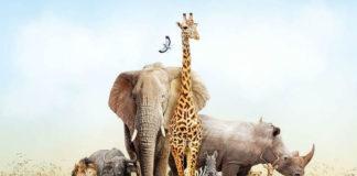 Este 4-O es el Día Mundial de los Animales (+Videos)