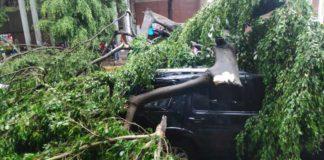 Fuertes lluvias derriba un árbol y daña dos vehículos en Caracas