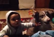 """Bebé y perrito compiten en decir primero """"mamá"""" (+Video)"""