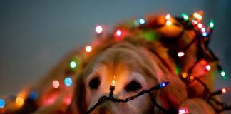Vea el perrito que decora árbol de Navidad (+Video)