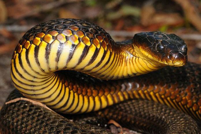 Adolescente peligra de muerte por mordedura de serpiente en Trujillo