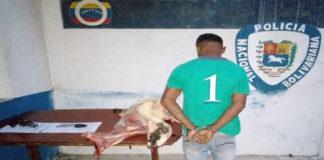 Por abigeato y porte ilícito detienen a cuatrero en Tacuato