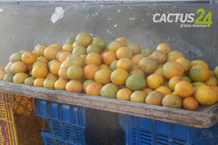 Por prevención al Covid-19 arrasó las naranjas y limones en Punto Fijo