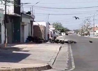 "¡De Terror!, ""Una zamurera"", calles, Punto Fijo, Video, Reporte Comunitario, Falcón"